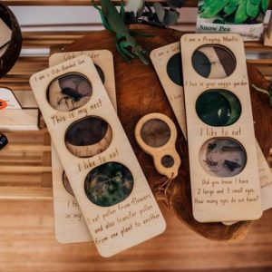 Collection of timber cards surrounded by insect toys